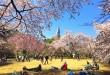 Sakura Bonjour Tokyo