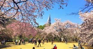 La météo des Sakura 2016